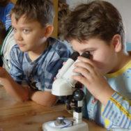 Экологические занятия и квесты