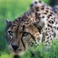В мире удивительных зверей
