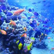 Обитатели морских глубин. Экскурсия с заданиями в океанариуме