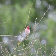Познавательная прогулка «Птицы и природа Битцевского лесопарка»
