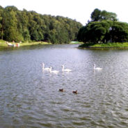 Птицы-обитатели водоёмов музея-усадьбы Царицыно