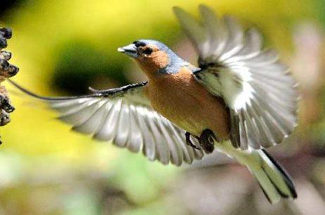 Птицы и природа Измайловского парка