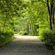 Познавательная прогулка «Птицы и природа Измайловского парка»