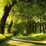 Природа Измайловского лесопарка