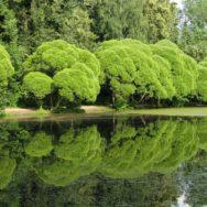 Растения Филёвского лесопарка