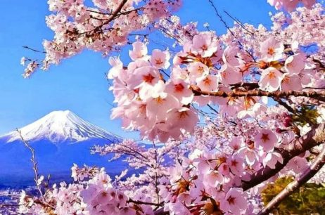 Япония вокруг нас